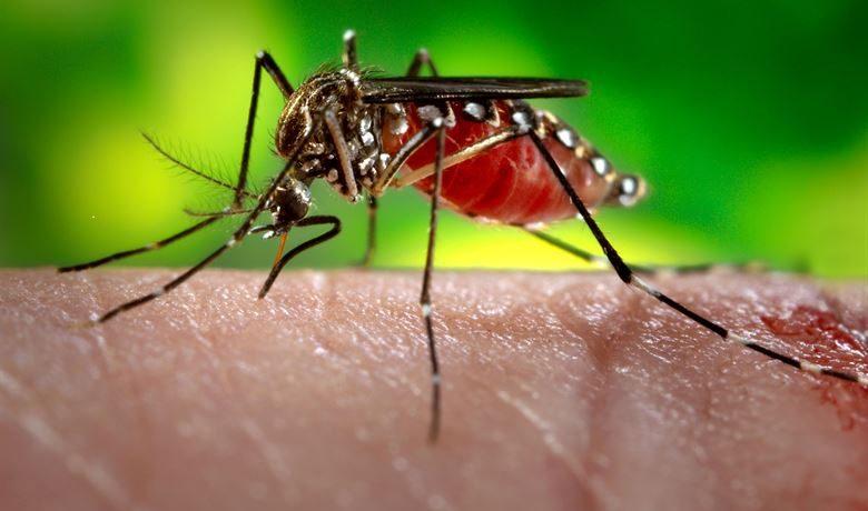 Usir Nyamuk Dengan Bahan Alami